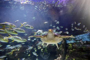 Skip the Line: SEA LIFE Timmendorfer Strand Admission Ticket