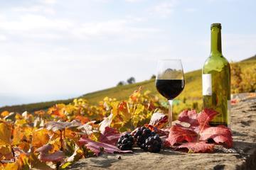 Degustação em Castelli Romani: viagem de um dia, incluindo a vinícola...
