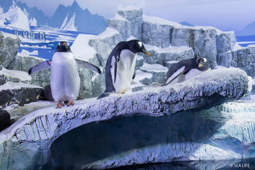 Skip the Line: SEA LIFE Konstanz Admission Ticket