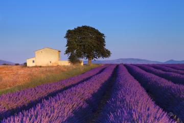 Provence Lavendelfelder - Ausflug von Aix-en-Provence