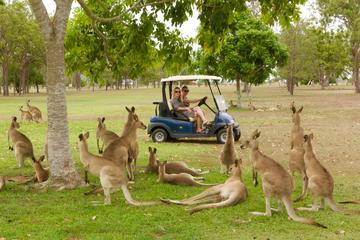 Small-Group Wildlife and Rainforest Tour from Port Douglas
