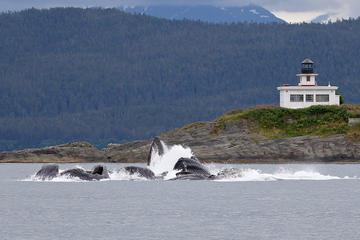 Avistamiento de ballenas y glaciar...