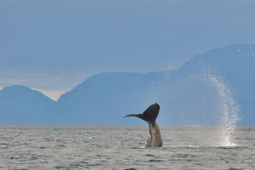 Excursão Terrestre em Juneau: Geleira Mendenhall, Observação de...
