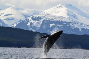Excursión por la costa de Juneau: Combinado de crucero de...