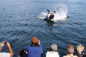 Excursión por la costa de Juneau: Crucero de avistamiento de ballenas...