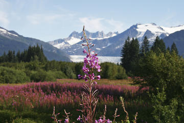 Visita turística a Juneau y tour por el glaciar Mendenhall Glacier...