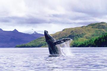 Baleia Assistindo Dia Inteiro