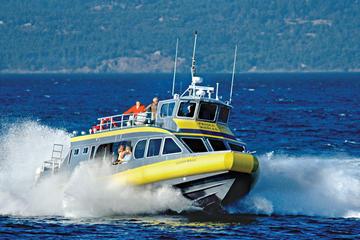 Crociera con avvistamento delle balene da Vancouver a Victoria