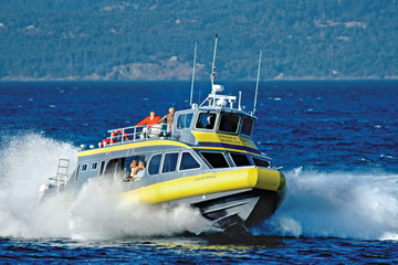Cruzeiro de observação de baleias de Vancouver a Victoria