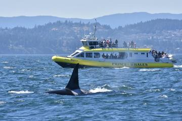 Half-Day Whale Watching Adventure from Vancouver