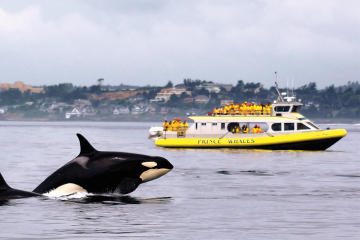 Ocean Magic Whale-Watching Adventure in Victoria