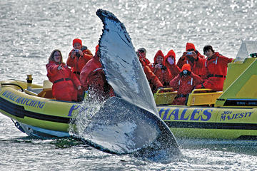 Day Trip Victoria Whale Watching Adventure in a Zodiac Vessel near Victoria, Canada