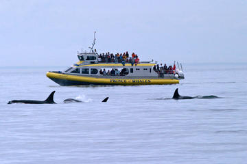 Whale-Watching Cruise from Victoria...