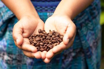 Escapada de un día a Sierra Madre de Oaxaca: Plantación de café Finca...