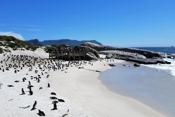 Peninsula Tour (Cape Point)