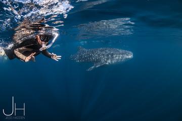 Deluxe WhaleShark Swim Tour