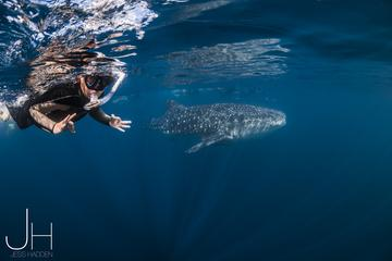 Deluxe WhaleShark Swim Tour on the Ningaloo Reef from Exmouth