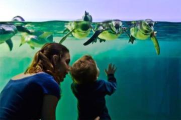 Ubatuba Aquarium Admission Ticket