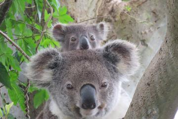 Byron Bay Wildlife Safari