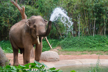 2-Night Chiang Mai Tour Including Elephant Park
