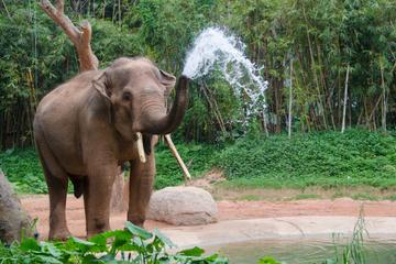 Tour de 2 nuits à Chiang Mai avec visite du parc naturel des éléphants