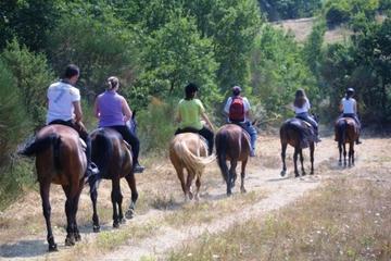 Passeio a cavalos pelas colinas da Toscana saindo de Siena