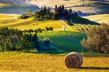 Tour del vino e della cucina toscana della Val d'Orcia da Firenze