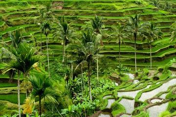 Full Day Tour of UBUD and Culture