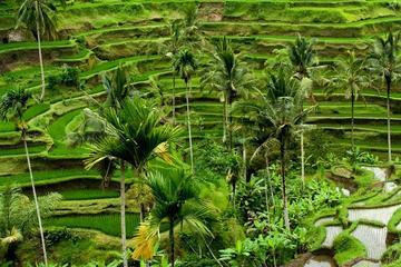 Travel Bali Villas-Full Day Tour