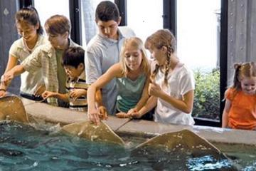 Book Houston City Tour and Admission to Downtown Aquarium on Viator