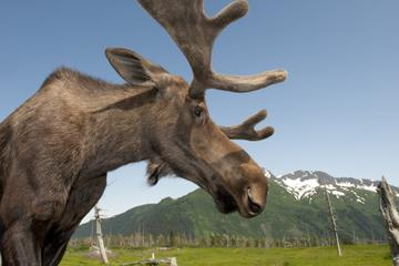 Anchorage Shore Excursion: Post-Cruise Transfer and Tour from...