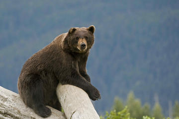 Day Trip Turnagain Arm and Alaska Wildlife Tour from Anchorage near Anchorage, Alaska