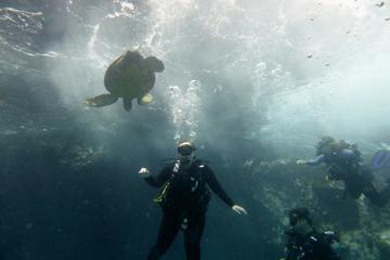 South Maui Shore Dives
