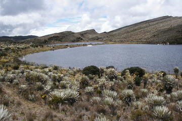 Hike to Sumapaz Moorlands