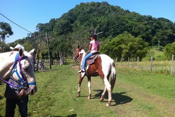 Harvest Caye Horseback Riding and Waterfall Swim Excursion from Placencia