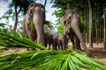 Aventura en Chiang Mai: campamento de elefantes, tirolina, descenso...