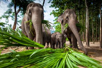 Chiang Mai Adventure : Camp des éléphants, la tyrolienne, rafting en...