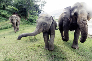 Exclusivité Viator : expérience privée Sanctuaire des éléphants à...