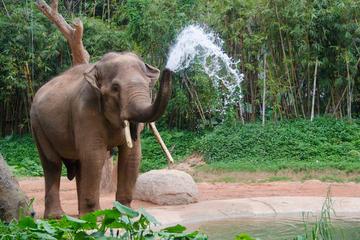 Excursion en petit groupe à la fondation Tong Bai pour les éléphants...