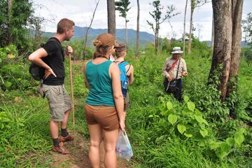 Opium Trail Trek Including Wat Phra That Doi Suthep and Hmong Village Tour*