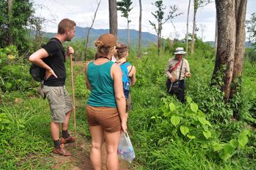 Trek sur la route de l'Opium comprenant une visite au Wat Phra that...
