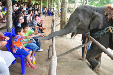 Viator Exklusiv: Elephant Conservation-Erlebnis in Chiang Mai