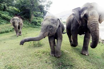 Viator Exklusiv: Privates Elefantenschutz-Erlebnis in Chiang Mai