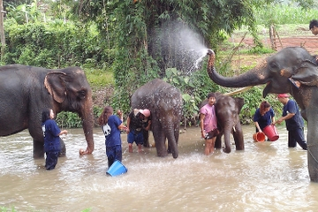 Visite de la fondation Tong Bai pour les éléphants de Chiang Mai