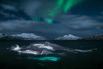 Whale Safari and Northern Light...