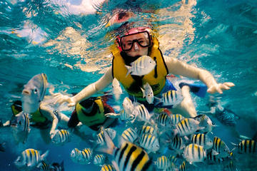 Snorkeling by Glass Bottom Boat (Starting at Tulum, Akumal ans Pto Aventuras)