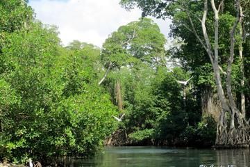 Experiencia original de manglar y playa desde Punta Cana