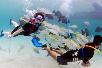 Marinarium Snorkeling Cruise