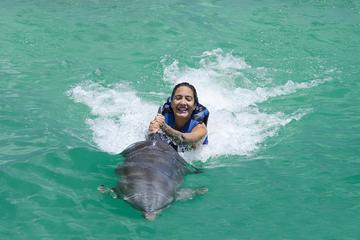 Programa de exploración de baño con delfines Funtastic