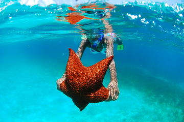 The 5 Pearls of the Caribbean - Saona Island Tour